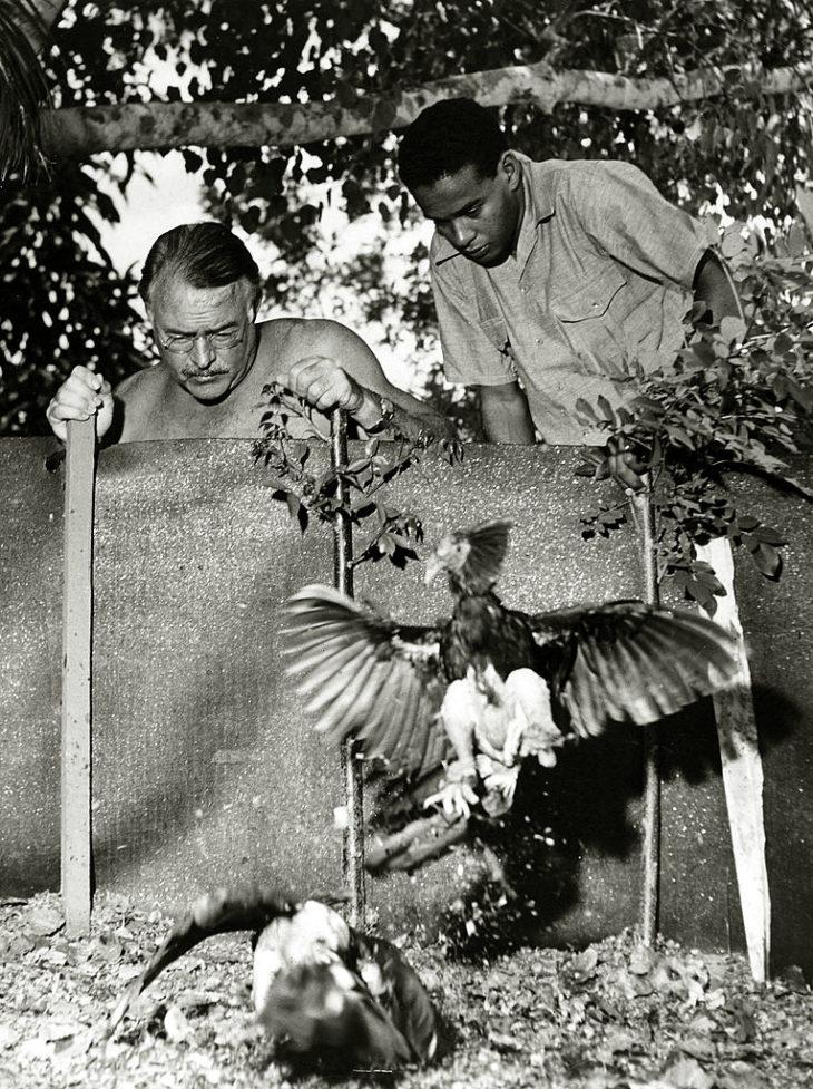 Хемингуэй с местным жителем смотрят на бой петухов, Куба, около 1951 года.