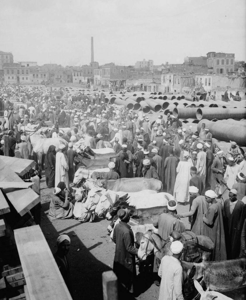 Каирский рынок по продаже ослов, 1900 год. Источник: Library of Congress