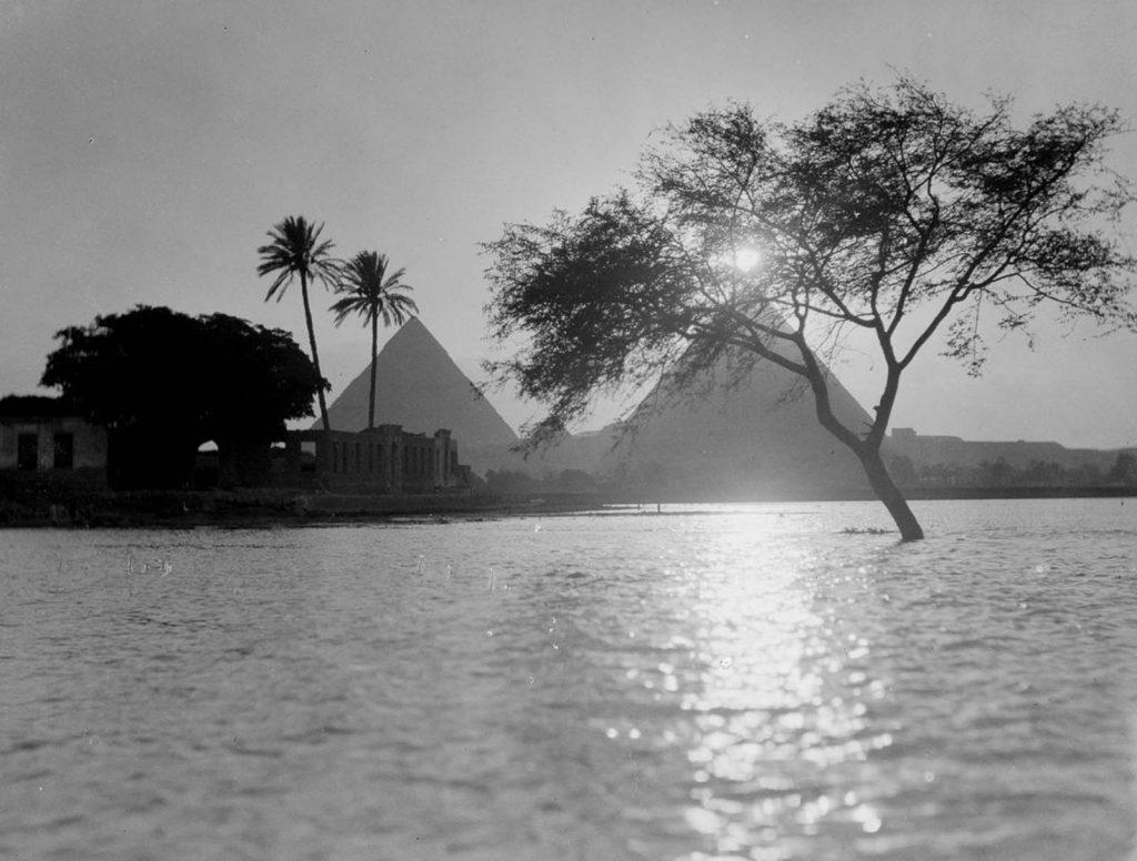 Вид на пирамиды, на переднем плане дерево затопленное водой, Каир, 1900 год. Источник: Library of Congress