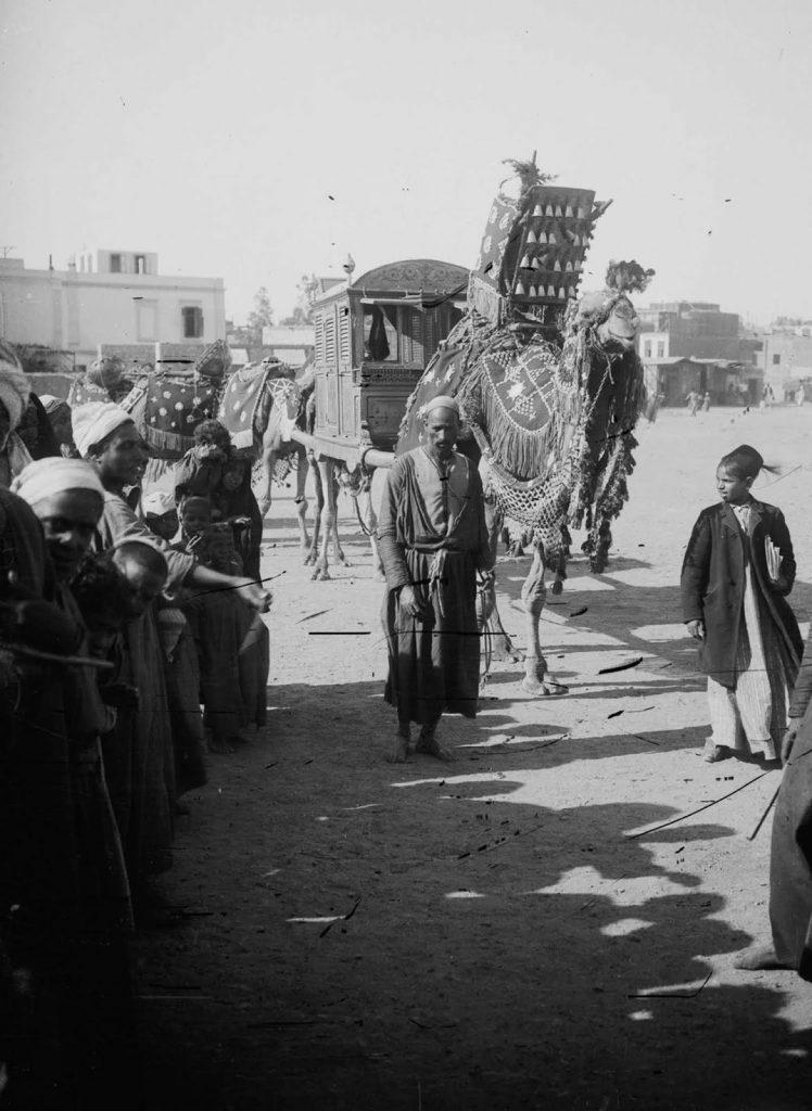 Свадебный верблюд, 1900 год. Источник: Library of Congress