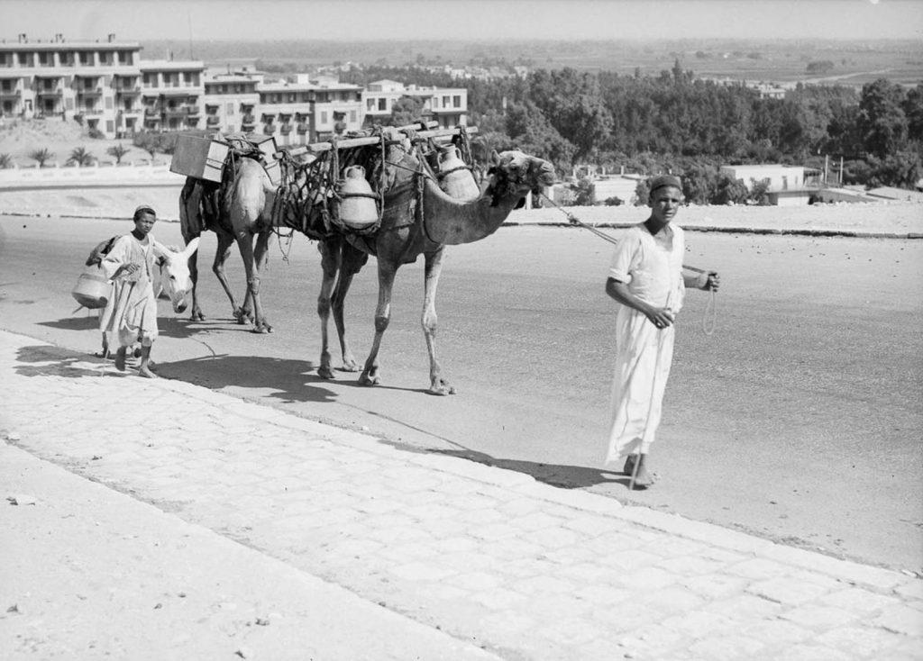 Верблюды и осел несут кувшины с водой. 1934 год. Источник: Library of Congress