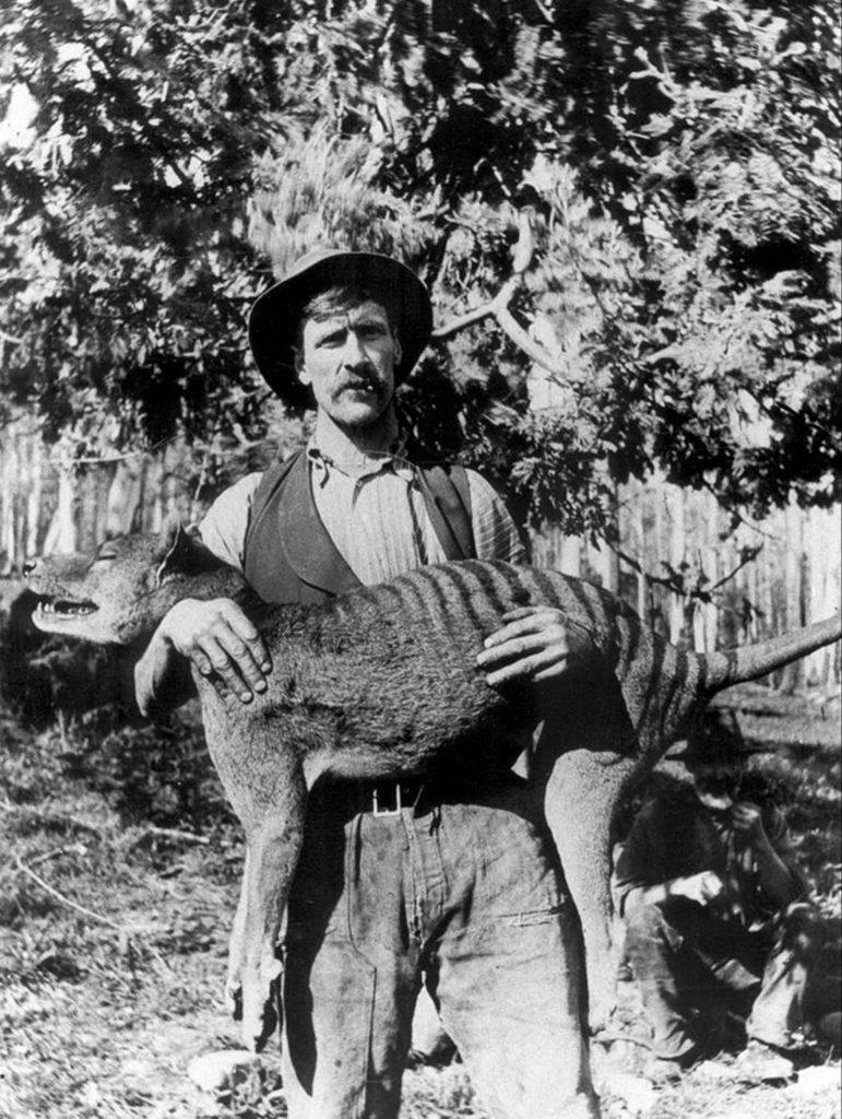 Тасманский охотник с убитым тилацином. 1925 год. Источник: Getty Images / AFP / Tasmanian Archive and Heritage Office